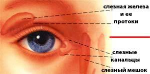 Воспалился глаз у ребенка – причины и симптомы