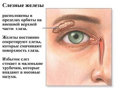 Суть заболевания синдром сухого глаза и причины его проявления