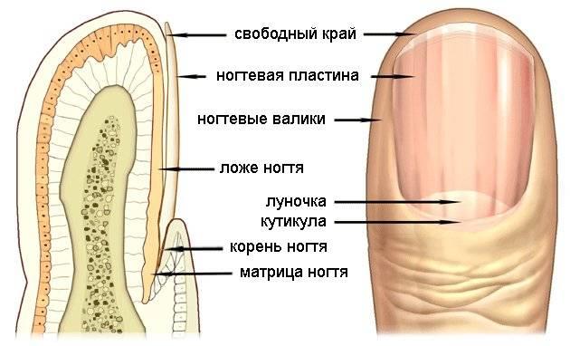 Эффективные препараты для лечения микоза ногтей