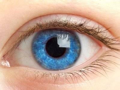 Строение глаза человека можно
