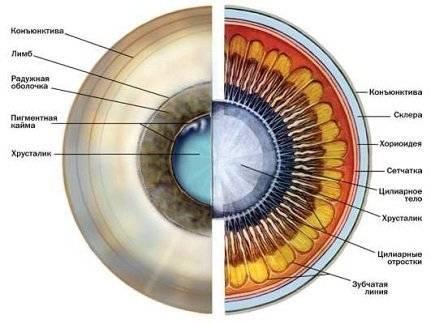 Презентация строение глаза