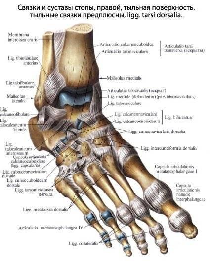 почему чешутся лодыжки ног