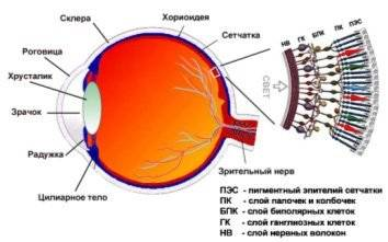 Причины заболевания сетчатки глаза