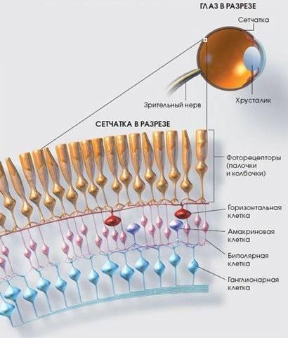 Распространенные заболевания сетчатки глаза