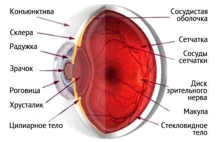 Дистрофия сетчатки глаза – симптомы