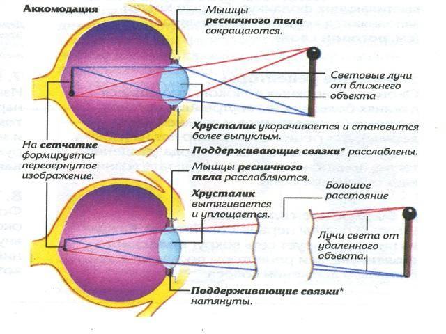 Народный рецепт улучшить зрение