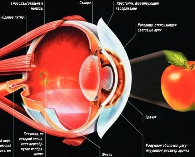 Если пропадает зрение в одном глазу